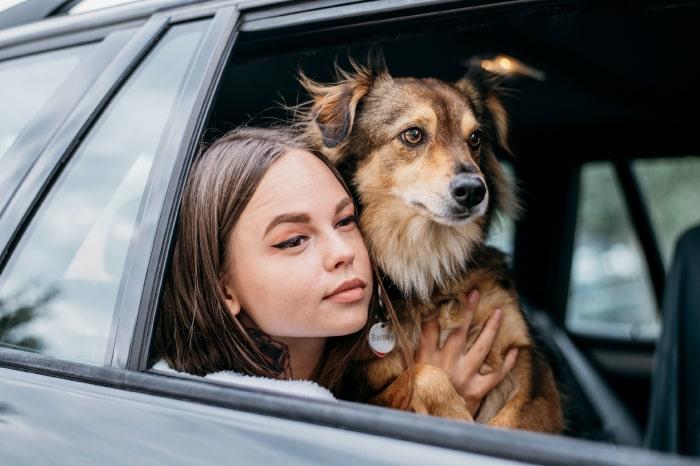 eliminar el olor a mascota del auto